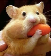 hamsterStuff