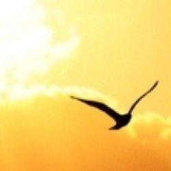 wingsofsoul