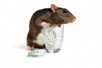 RatsnETOH